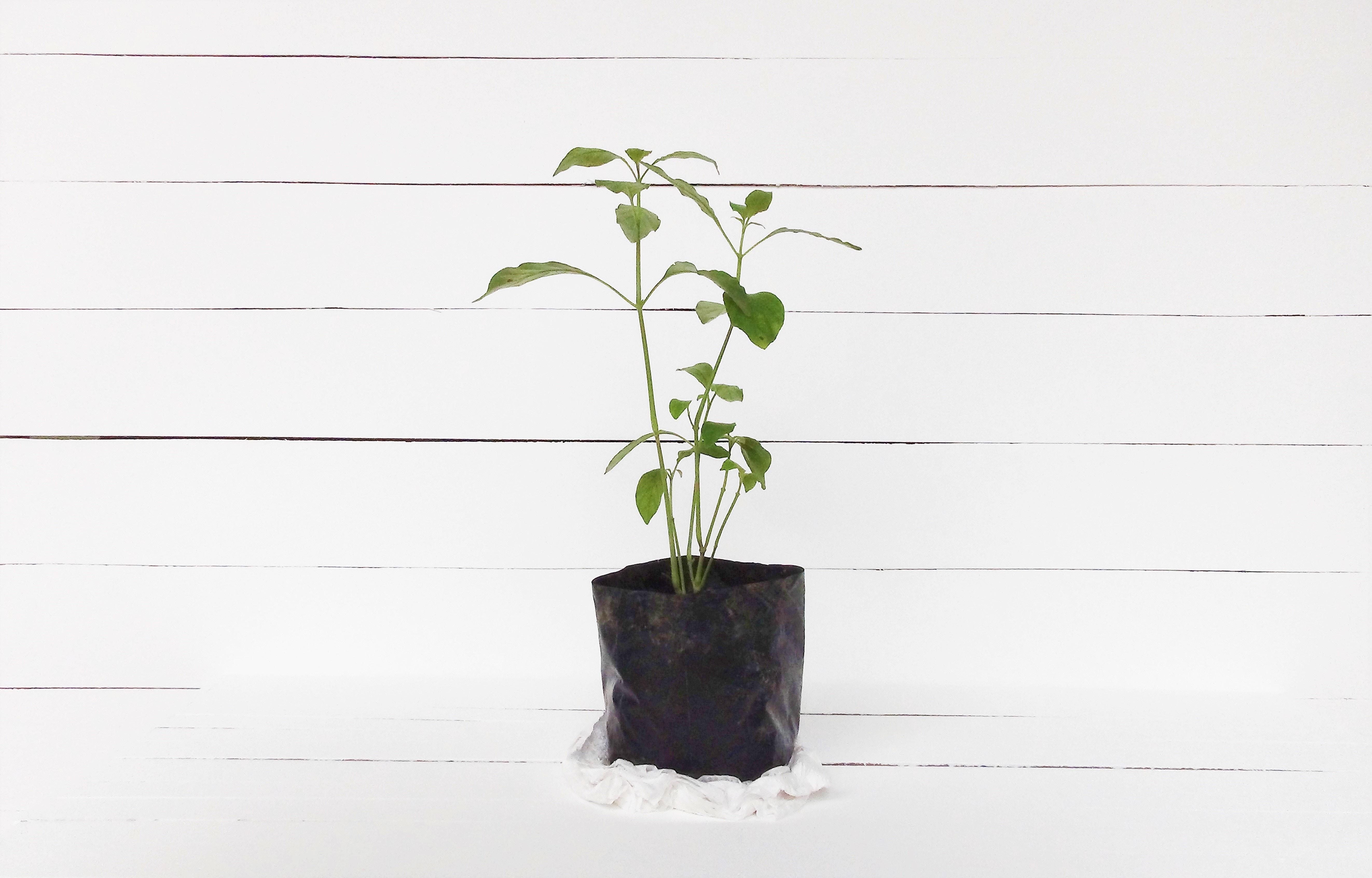 como adubar uma horta em apartamento